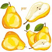 Постер, плакат: Pear Isolated Vector