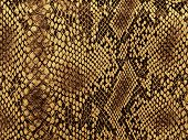 stock photo of python  - snake skin with the pattern lozenge style - JPG