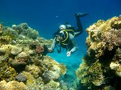Colorful Coral Reef And Diver In Tropical Sea, Underwater poster