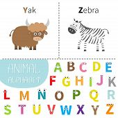 Постер, плакат: Letter Y Z Yak Zebra Zoo Alphabet English Abc With Animals Letters With Face Eyes Education Card