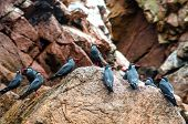 Paracas National Park In Peru poster