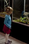 Child looking at iguana