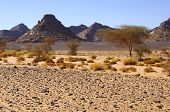 picture of scant  - Rocky desert landscape with scarce vegetation in the Acacus Mountains Sahara desert Libya - JPG