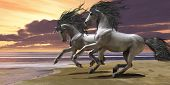 picture of bucking bronco  - Two white unicorns prance and play near the ocean - JPG
