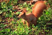 Cute And Furry Squirrel In Spring City Park poster