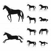 Isolated Object Of Fauna And Mare Icon. Collection Of Fauna And Stallion Stock Symbol For Web. poster