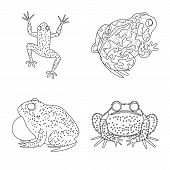Isolated Object Of Amphibian And Animal Logo. Collection Of Amphibian And Nature Vector Icon For Sto poster