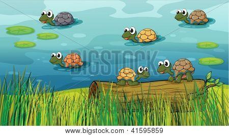 Постер, плакат: Иллюстрация из группы черепах в реке, холст на подрамнике