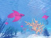 pic of fighter-fish  - Several red betta fishes swimming under water - JPG