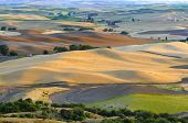 pic of fall-wheat  - Rolling land of eastern Washington State in the Palouse region - JPG