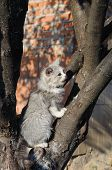 foto of mew  - Young grey cat on a tree mewing - JPG