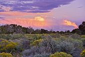 image of plant species  - Beautiful Colorful Sunset in Northern Arizona State in USA - JPG