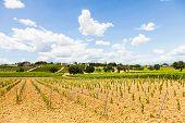 image of youg  - Italy Tuscany region Orcia Valley - JPG