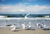 picture of flock seagulls  - Seagulls on the beach - JPG