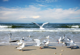 stock photo of flock seagulls  - Seagulls on the beach - JPG