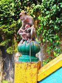 ������, ������: Monkey