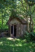 pic of century plant  - 18th Century medieval woodcutters shed in forest - JPG