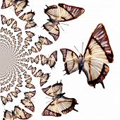 stock photo of mustering  - Digital painted Illustration of Butterflies in kaleidoscopic Pattern - JPG