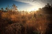 stock photo of early morning  - gold sunrise over marsh during misty autumn morning - JPG