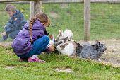 image of feeding  - Boy and girl feeding rabbits - JPG