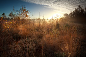 picture of marshes  - gold sunrise over marsh during misty autumn morning - JPG