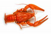 stock photo of crawfish  - Boiled crawfish is on a white background - JPG