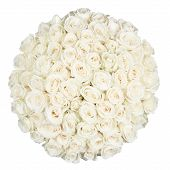 pic of single white rose  - Seventy one white roses isolated on white - JPG