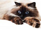Постер, плакат: Кошка