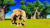 picture of baobab  - Single elephant standing next to baobabs - JPG