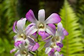 foto of epiphyte  - Orchids occur worldwide, especially as epiphytes in tropical forests, 