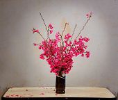 pic of sakura  - Red Sakura in a vase on the table still life - JPG