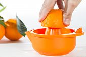pic of valencia-orange  - Squeezing juice natural valencia orange with white background - JPG