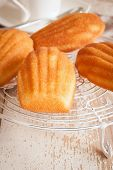 picture of petition  - Madeleines or petite madeleine a traditional cake from the Lorraine region of France - JPG