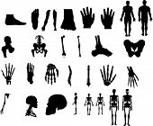 pic of human body  - various  parts of human body in 2d - JPG