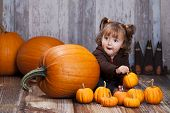 picture of gourds  - Adorable toddler surrounded by giant pumpkins - JPG