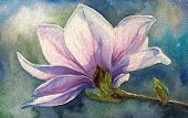 picture of japanese magnolia  - Magnolia blossom on branch - JPG