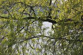 picture of illinois  - Spring Time tree growth with Moon Lake at Hoffman Estates, Illinois ** Note: Soft Focus at 100%, best at smaller sizes - JPG