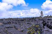 stock photo of vegetation  - View of vegetation on the lava field - JPG