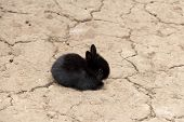 stock photo of tame  - Tame or domestic rabbits are domesticated form of the type of European rabbit  - JPG