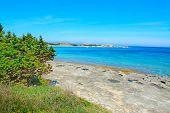 picture of shoreline  - grey rocks and green plants by Capo Testa shoreline Sardinia - JPG