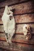 pic of eye-sockets  - Horse and deer skull on the wall of a wooden house - JPG