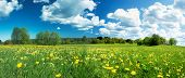 stock photo of dandelion  - Green field with yellow dandelions and blue sky - JPG