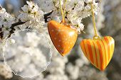 foto of orange blossom  - Two orange hearts hanging on a tree with white blossom. Spring wishes free space for text write. ** Note: Shallow depth of field - JPG