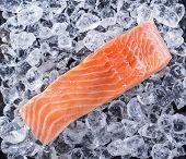 picture of salmon steak  - Salmon steak on crashed ice - JPG