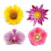 image of hollyhock  - colorful floral collage lotus - JPG