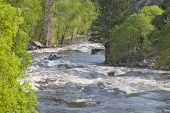stock photo of collins  - Springtime whitewater of Cache la Poudre River near Fort Collins - JPG