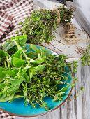 stock photo of oregano  - Fresh green herbs - JPG