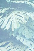 foto of jungle exotic  - colored exotic jungle print on silk texture - JPG