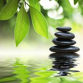 picture of green leaves  - Grean leaves over zen stones stack on water surface - JPG