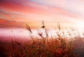 foto of landscapes beautiful  - Foggy Landscape - JPG